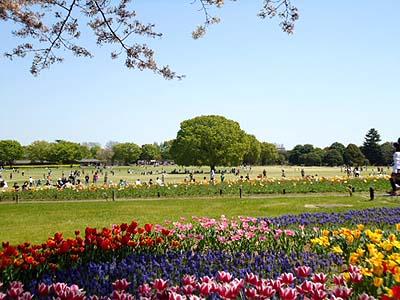 桜も同時とはいかんようです。ザンネン.jpg